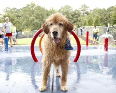 Dog Sports You Might Not Know about