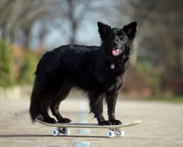 2014 Was an Improbable Year for German Shepherds