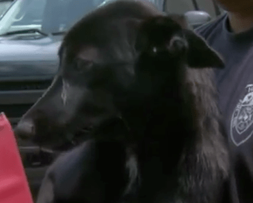 Firefighters Rescue a Dog Stuck in a Tire Rim in Houston