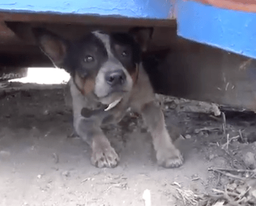 Dog is Rescued After Living Under a Dumpster for Nearly a Year