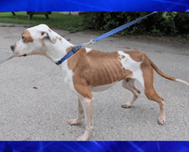 A Couple is Charged After Their Dogs Were Found Nearly Starved to Death