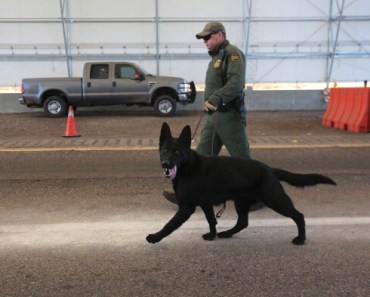 Bravery is Just One of the Many Great Characteristics of the Black German Shepherd