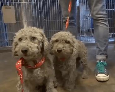 Saving Two Homeless Dogs Hiding in a Junkyard