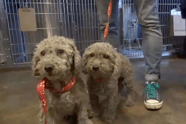 homeless-dogs-junkyard