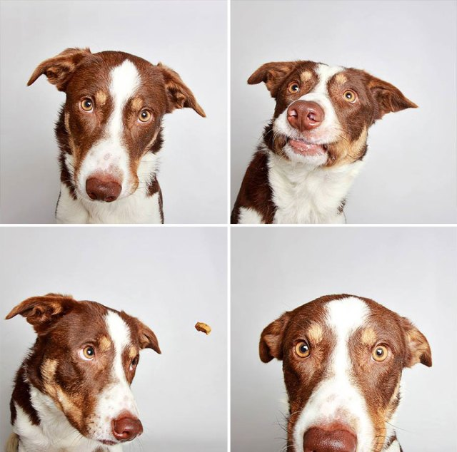 adopted-dog-teton-pitbull-humane-society-utah-1