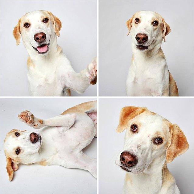 adopted-dog-teton-pitbull-humane-society-utah-20
