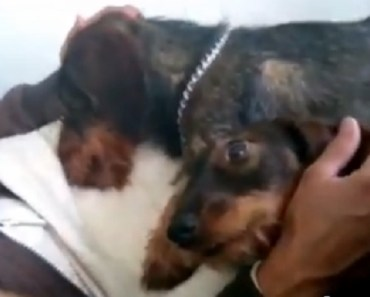 cuddles-dogs