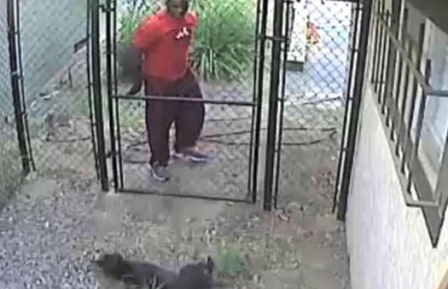 gary-sartor-pitbull