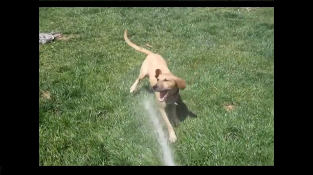 Dog and water hose