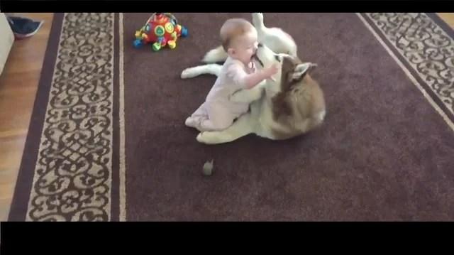 Husky and baby
