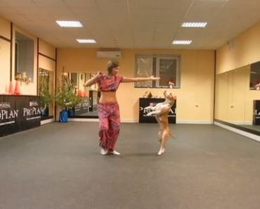 Pit Bull's Dance Routine Floors Those Who Were Watching