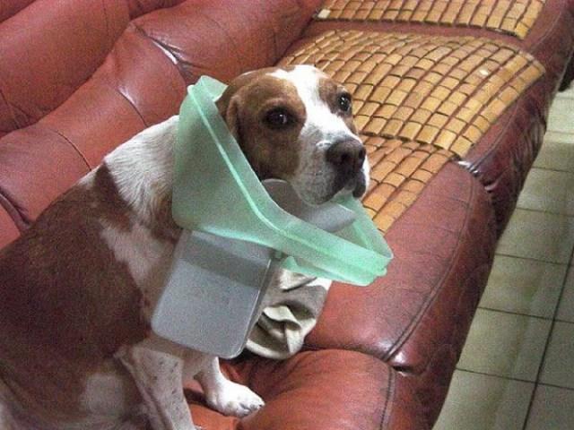 trashcan dog