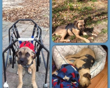 Paralyzed Puppy Who Was Abandoned in a Park Gets to Walk Again