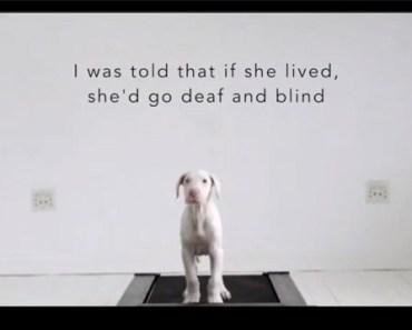 tredmill dog