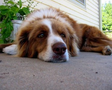 Five Ways to Show Your Dog That You Appreciate Them
