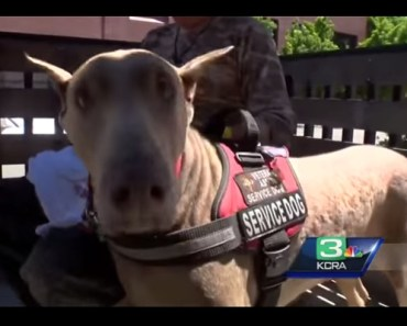 Dying Veteran's Last Wish Is To Find A Loving Home For His Service Dog