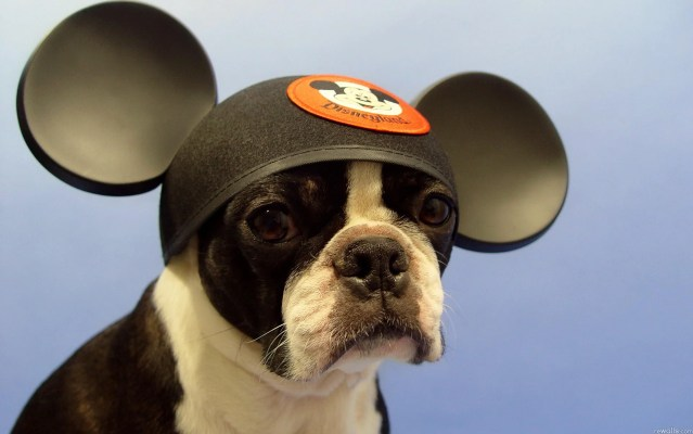 Cute dog wearing a beautiful hat wallpapers 1900x1200 (03)