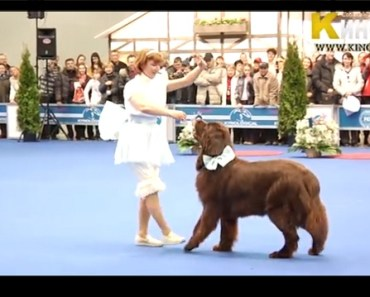 dog and woman dancing