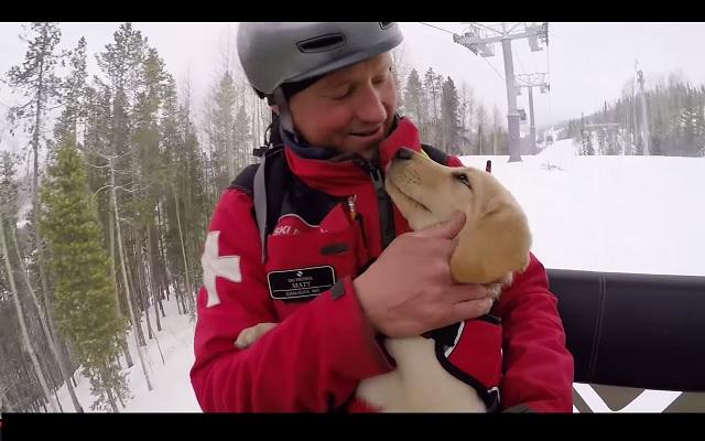 snow patrol puppy
