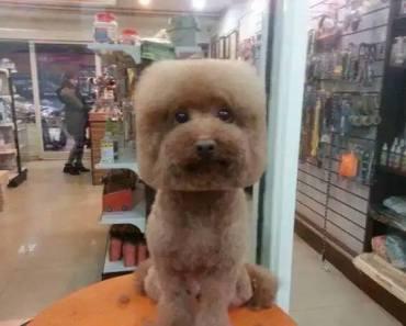 square dog 2