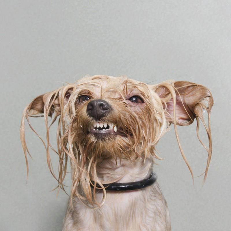 Wet_Dog_3