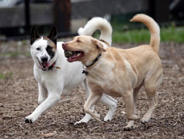 Dog Park Action