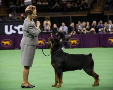 Rottweilers make great pets