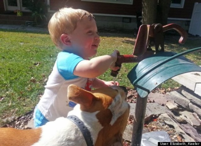 child playing with this pit bull