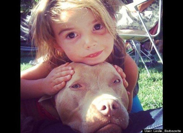 little girl loves her pit bull