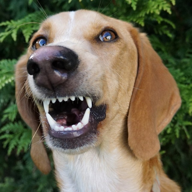 modeling dog getting crazy