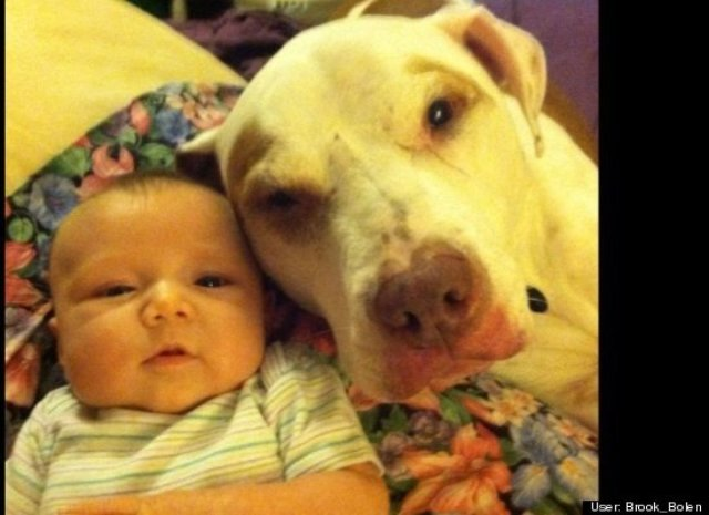pit bull and a baby