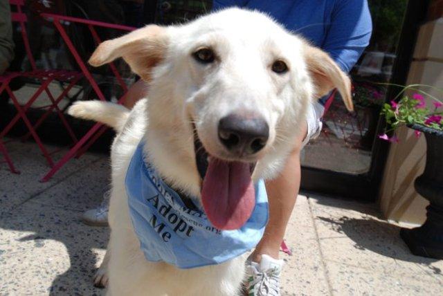 dog upu for adoption