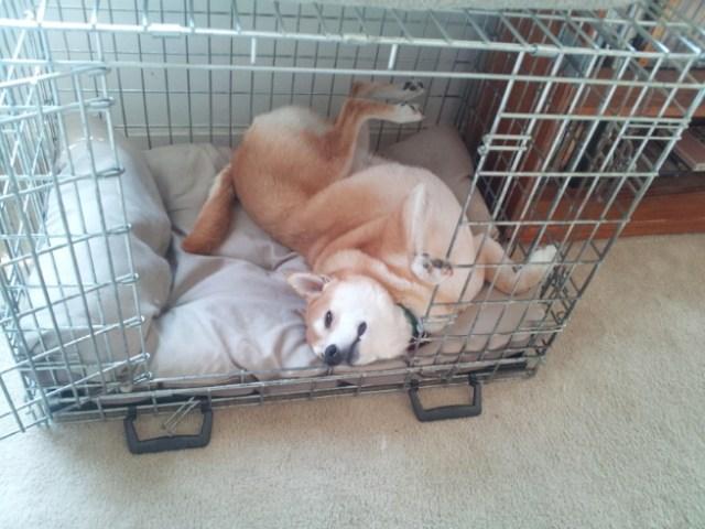 don't make this dog wake up