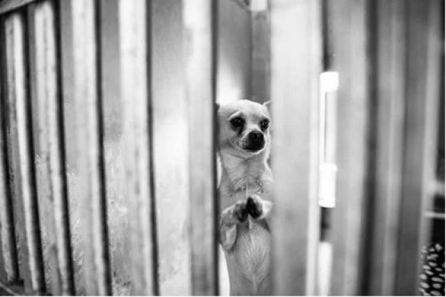 prayer dog