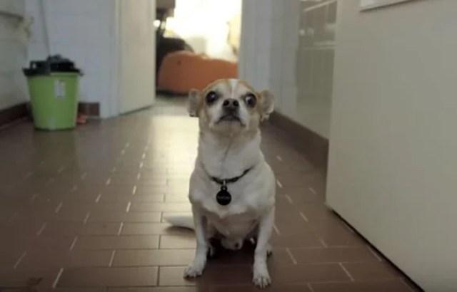 bath time dog