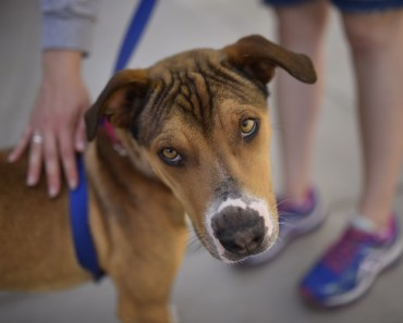 Shelter in Arizona Doesn't Identify Dogs by Breed