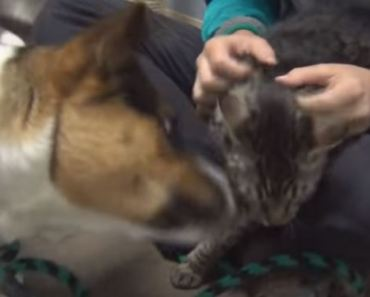 Cat and Dog Separated After Being Surrendered Are Reunited