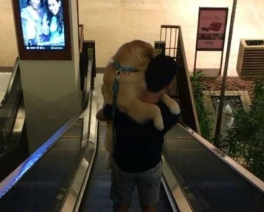 Scared Golden Retriever Takes a Ride in His Humans Arms Down the Escalator