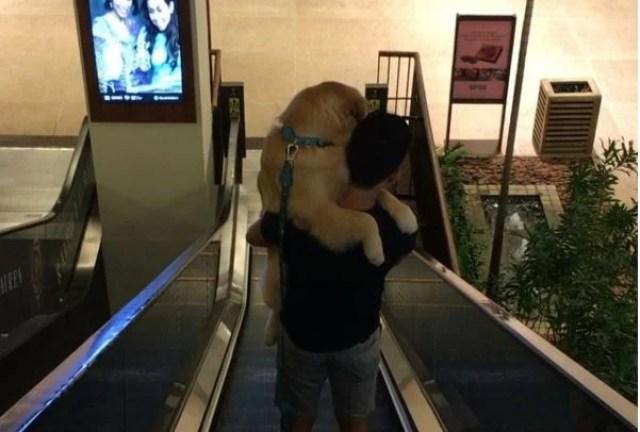 dog on escalator