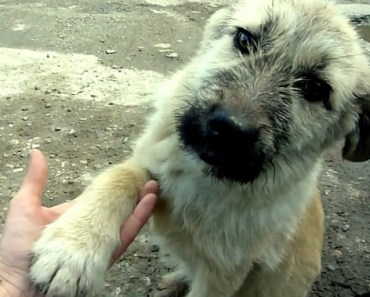 Watch This Dog Shake the Hands of His Rescuers