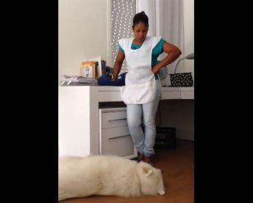 Misbehaving Dog Begs for Forgiveness
