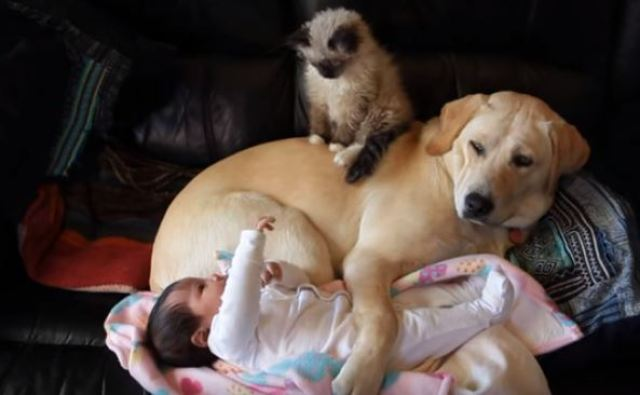cat and dog and baby