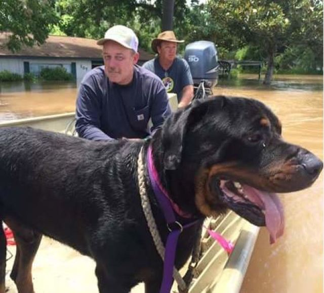 rescued flood dogs