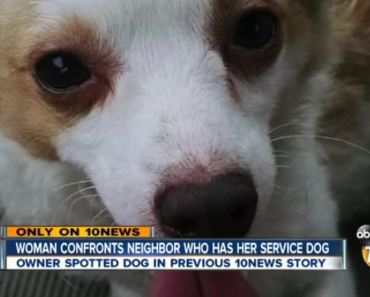 Two Women Claim the Same Service Dog is Theirs: Who Does it Belong To?