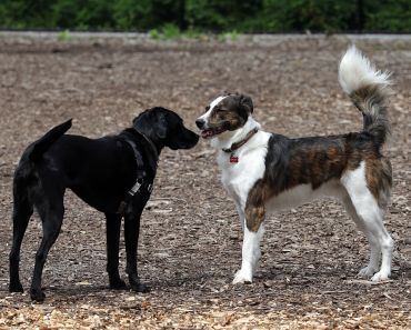 Business Sets Up Doggie Play Dates for Your Best Pal