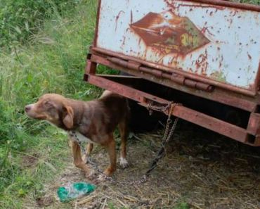 Deliberately Injured Dog Rescued and Given Better Life