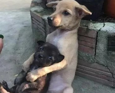 Scared Dog Holds Tightly to Smaller, More Scared Dog Friend