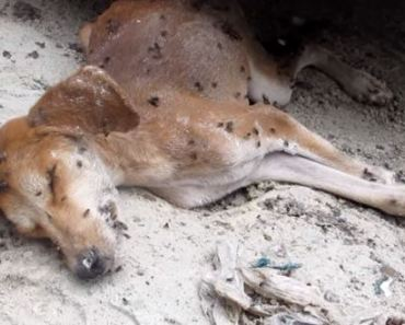Rescuers Find A Puppy They Thought Was Dead but Miraculously Survived