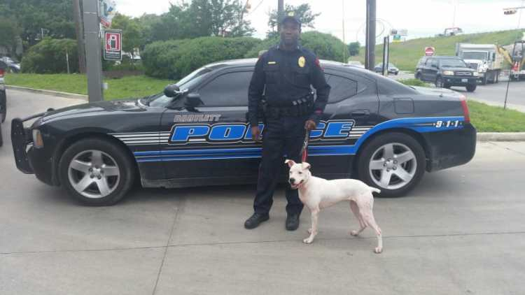 Pit Bull and Cop