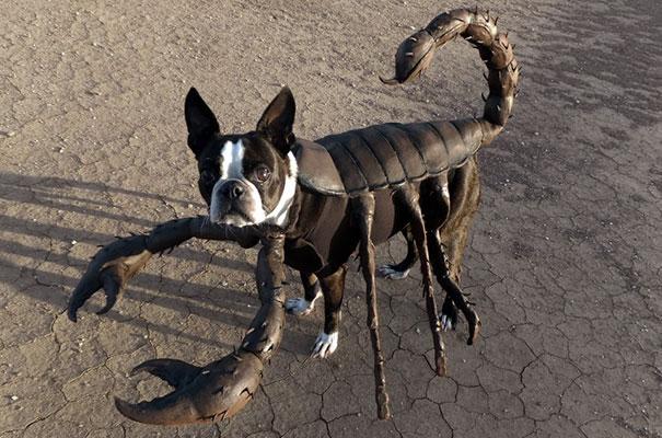 halloween-dog-costumes-8